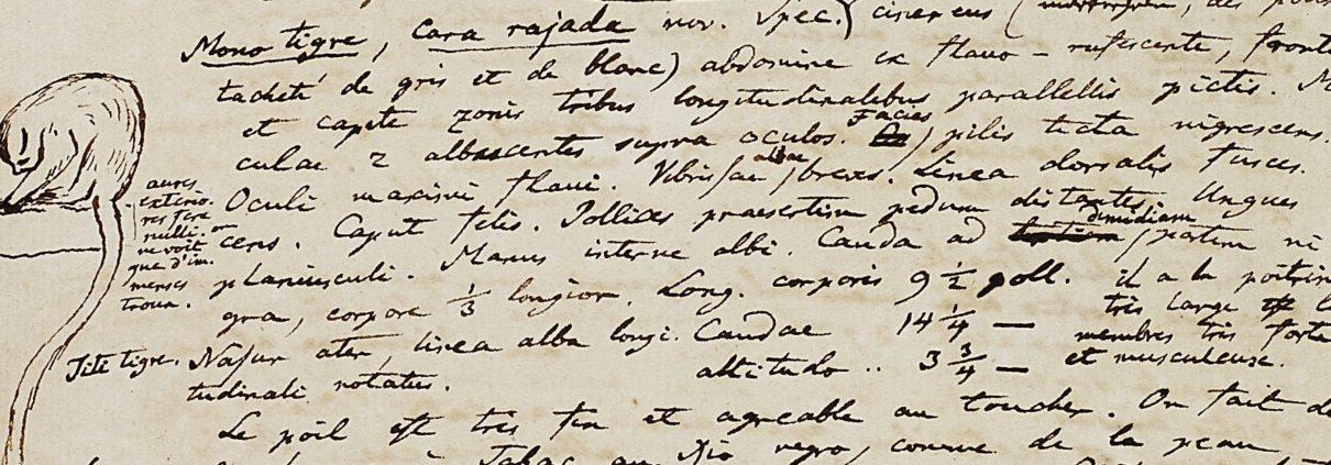 Ausschnitt aus: Nachlass Alexander von Humboldt, Tagebuch IV, Bl. 173v. – © Staatsbibliothek zu Berlin – Preußischer Kulturbesitz
